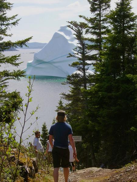 An iceberg between the trees