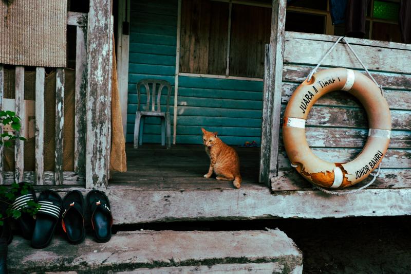 Ginger house cat on Tioman Island