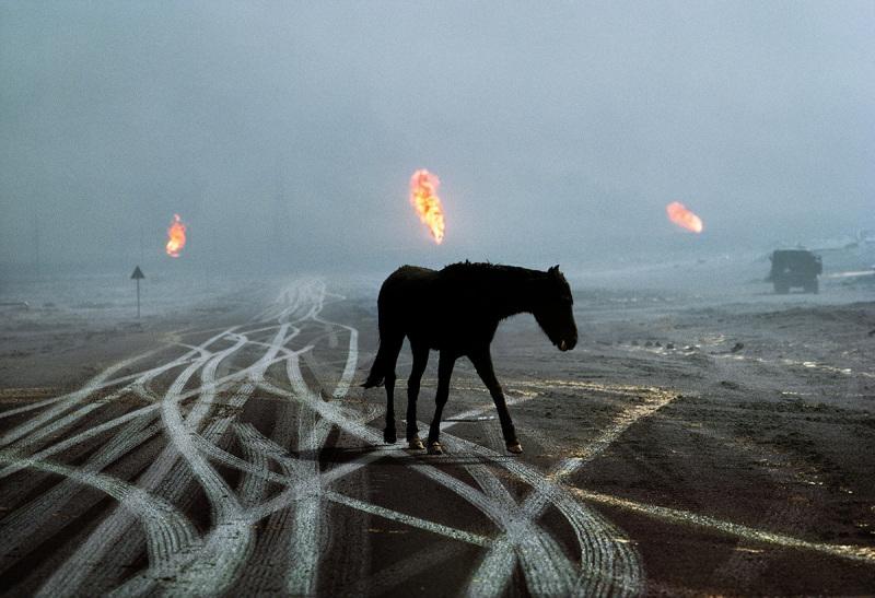 A horse in an oilfield – Al Ahmadi, Kuwait, 1991