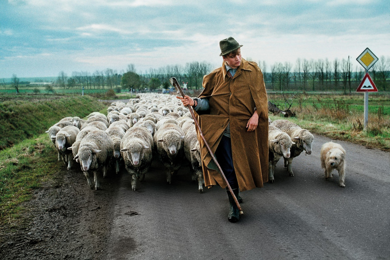 A shepherd with his sheep – Magdeburg, Germany, 1989